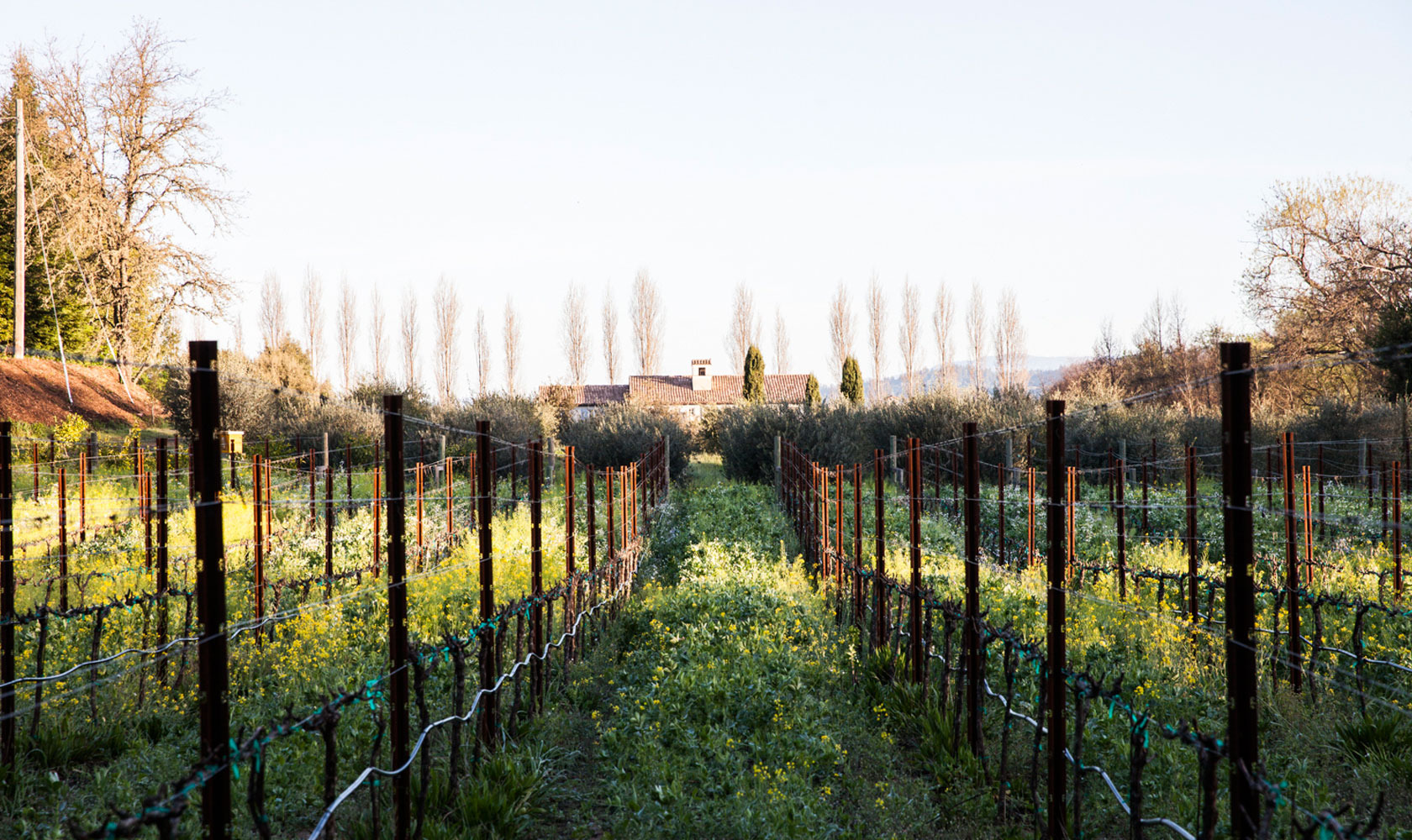 About Our SHED - Vineyards