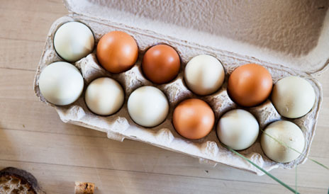 Farm fresh eggs at SHED Cafe