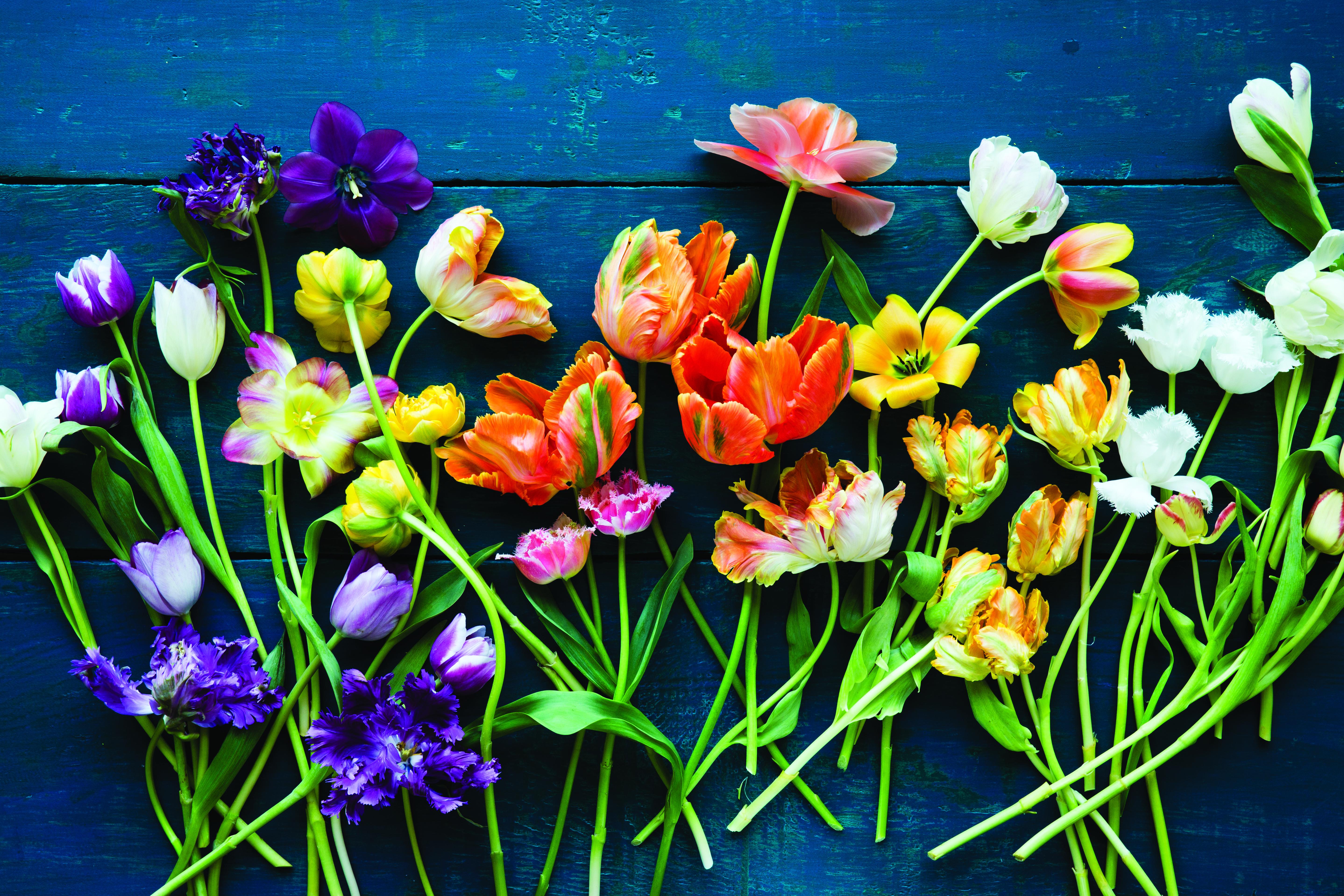 Spring Floral Intensive With Ariella Chezar Healdsburg Shed