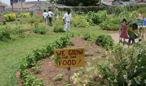 edible schoolyards